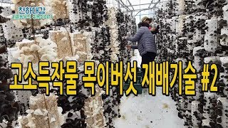 고소득작물 목이버섯 재배 시설하우스재배 귀농작물 재배비용 수익 목이버섯 기능성[시골농부 천하대감]