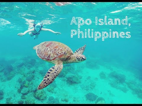 Apo Island, when wildlife conservation becomes VITAL for the population // Philippines 2018