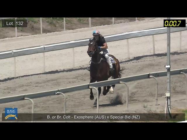 Lot132 Colt - Exosphere X Special Bid (NZ) (Breeze Up)