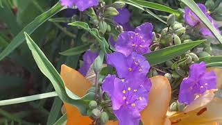 춘천 교동길 아침산책 자연의 소리,꽃, 청명한  하늘 …