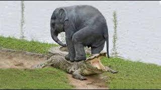 【ド迫力】 野生の象の動画です。常に命の危機に晒され、ライオンやカバ...