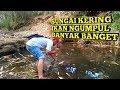 Mancing Di Sungai Kering Ikan Ngumpul Dapat Banyak