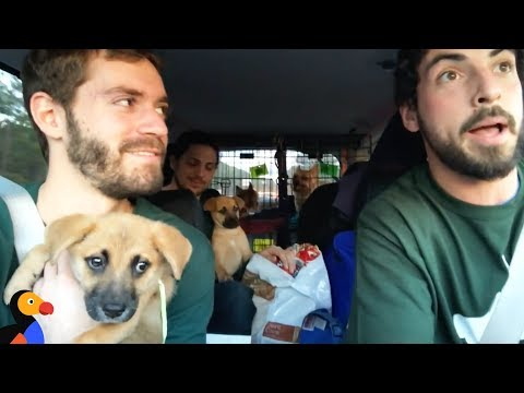 Rescue Dogs Go On EPIC Road Trip With Awesome Guys To Find Forever Homes   The Dodo