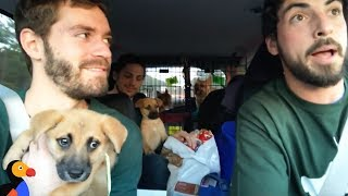 Rescue Dogs Go On EPIC Road Trip With Awesome Guys To Find Forever Homes | The Dodo