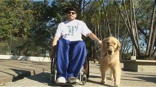 Бразильские инвалиды требуют «узаконить» собак-помощников (новости)