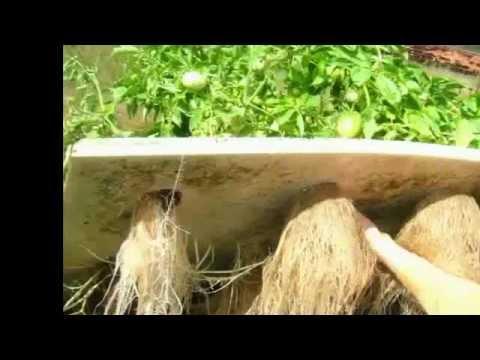 Build Aquaponics - Aquaponic Garden