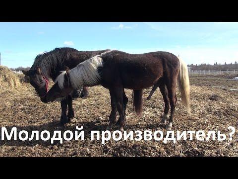 Как возбудить лошадь
