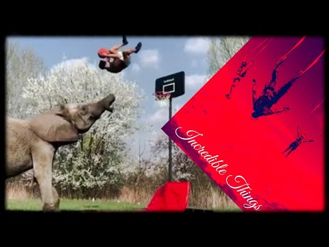 Download AMAZING People Doing IMPOSSIBLE Things  BEST Compilation EVER #1 🐘