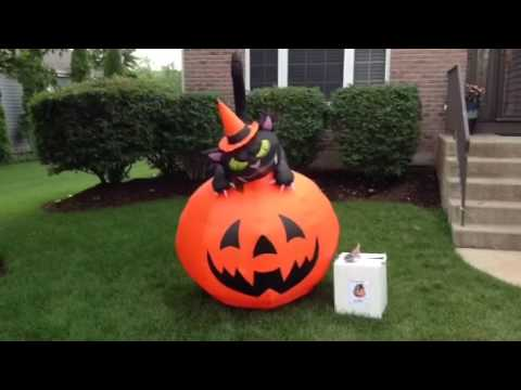 Head Turning Cat On Pumpkin Airn Inflatable