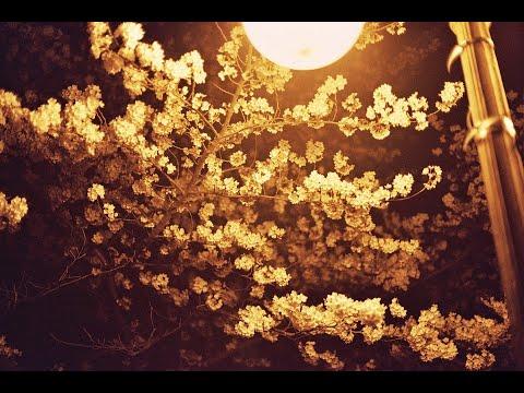 Kiraz Çiçekleri - Burak Tinaz