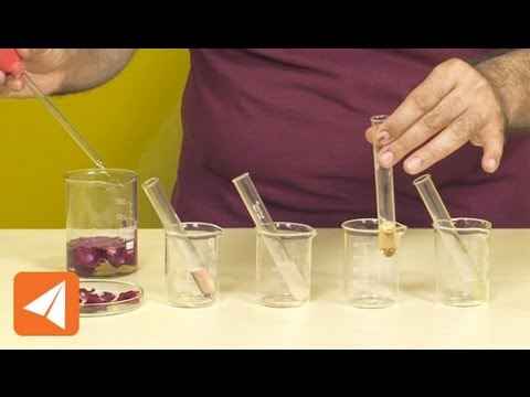 China rose water as an acid base indicator | Acids & Bases | Chemistry