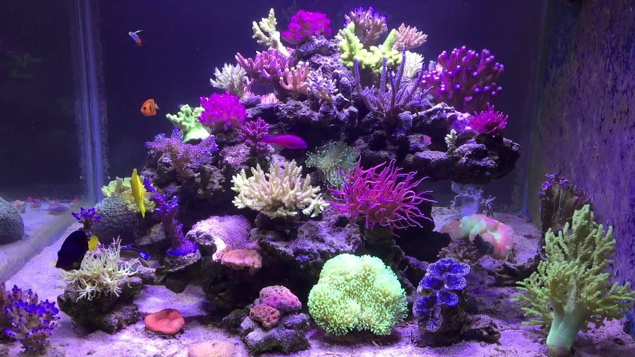 Korallen Zucht Aquaillumination Hydra 52 Led After A Year
