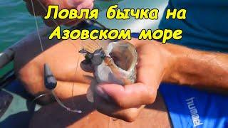 Утверждены правила рыболовства для Азово-Черноморского ...