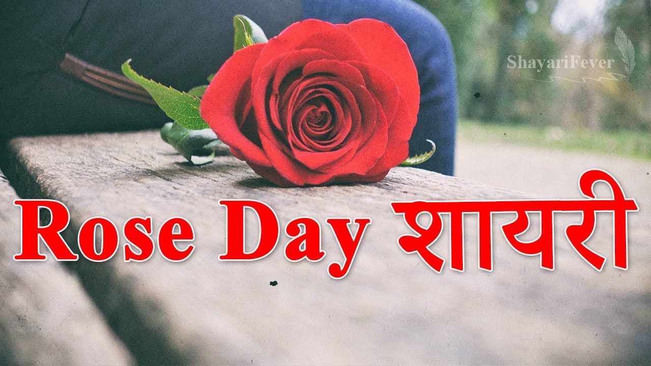 Top 4 Rose Day Shayari In Hindi Rose Day Wishes 7 Feb 2020