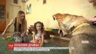 У безпородної собаки виявився хист до роботи з малюками реабілітаційного центру