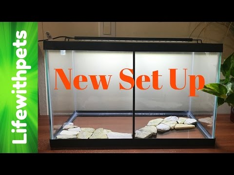 How to Set up a Divided Betta Fish Tank (In Depth)