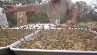 FLOUR FEEDING Beepollen Substitute Spring Beekeeping Video, Beekeeper John Pluta Georgia Honeybees