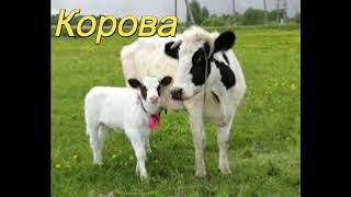 Как говорят домашние животные для самых маленьких.Детям!