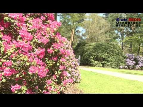 rhododendron dalen vid backarna i norrk ping doovi. Black Bedroom Furniture Sets. Home Design Ideas