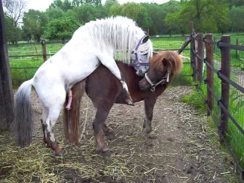 HORSES MATING - YouTube