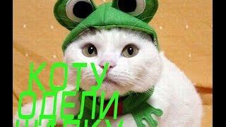 Стрим-пингвин: коту одели шапку!!!