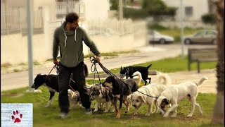 Walking a pack of 9 rescue dogs!