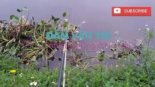 Đầm Vân Trì, hồ câu tự nhiên khủng nhất Hà thành