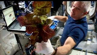 Space Station Live: How Does Your Garden Grow in Space?