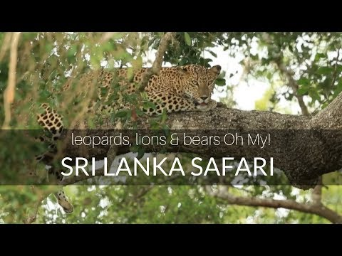 Sri Lanka Wildlife Safari