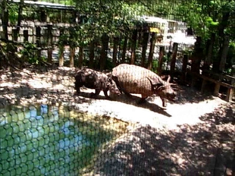 Lowry Park Zoo Jamie, Jahi & Arjun