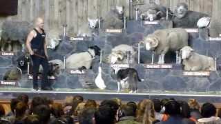 アグロドーム、ショーの最中の様子です。 牧羊犬は、ストロングアイ・ヘ...