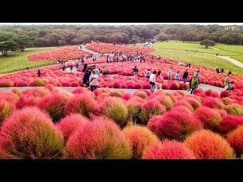 Top 10 Most Beautiful Flower Gardens In Japan