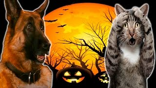 Смешные Кошки и Собаки боятся Хэллоуина - Забавные Кошки и Собаки - Смешные Животные 2016