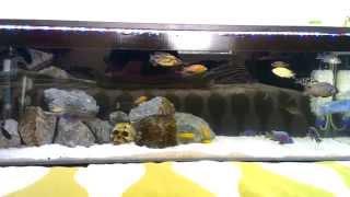 African Cichlids - Diy K1 Moving Bed Filter