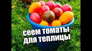 Сеем томаты для теплицы. Простой способ— хороший результат. СОВЕТЫ!! Московская обл.