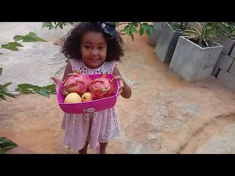 Frutas em vasos da Júlia , colhendo romã