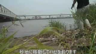 7月25日、テナガエビ釣りのメッカと言われる平井大橋に行きました。いつ...