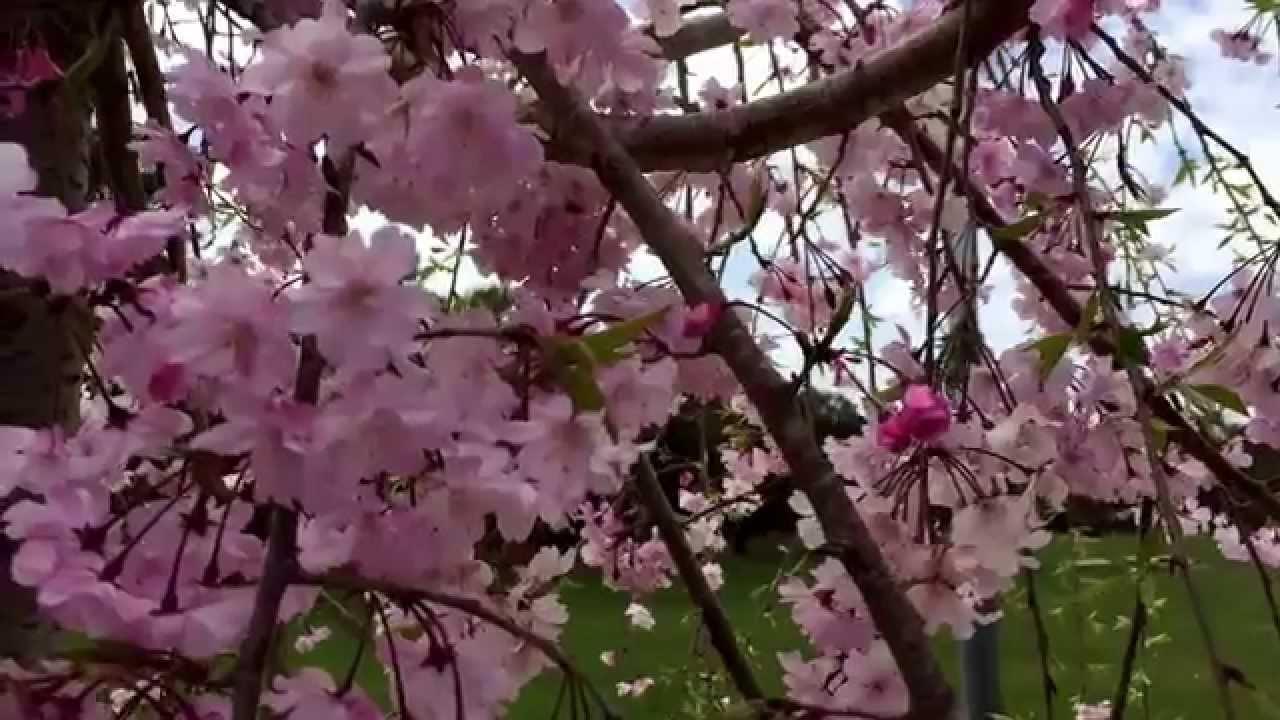 Beautiful Spring Flowers At Sarah Duke Garden In North Carolina