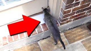 DUDE THE CAT GOT OUTSIDE