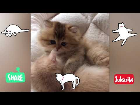 Funny Cats Cute Cats, and Adorable Kittens That Will Make you Laugh your Head off Best Funny Cat #31
