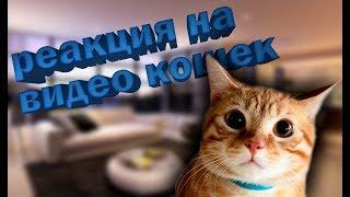 Реакция девушки на кошек. Девушка смотрит ролик с котятами. кошки видео