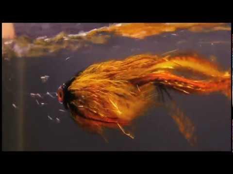 Swimtank Sessions - Fly Obsessions Nick Granato