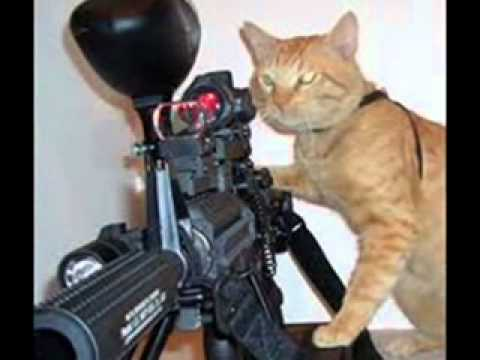 video of cats with guns!!!! funny - YouTube