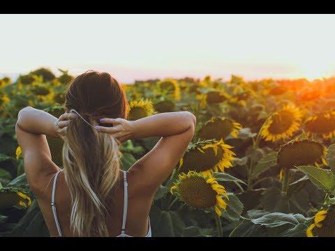 Sunflower Field | Dixon, California