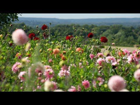 Cut flower farm in Surrey - Plantpassion