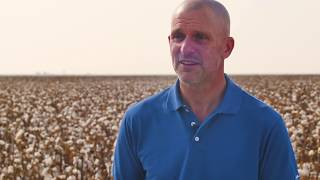 Supima Cotton - The Story of American-Grown Luxury