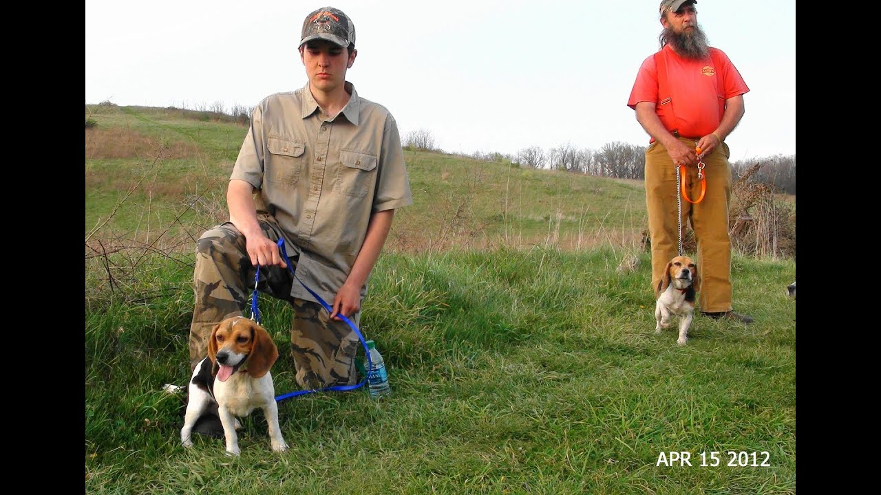 6 Ways Of Looking At A Beagle American Kennel Club