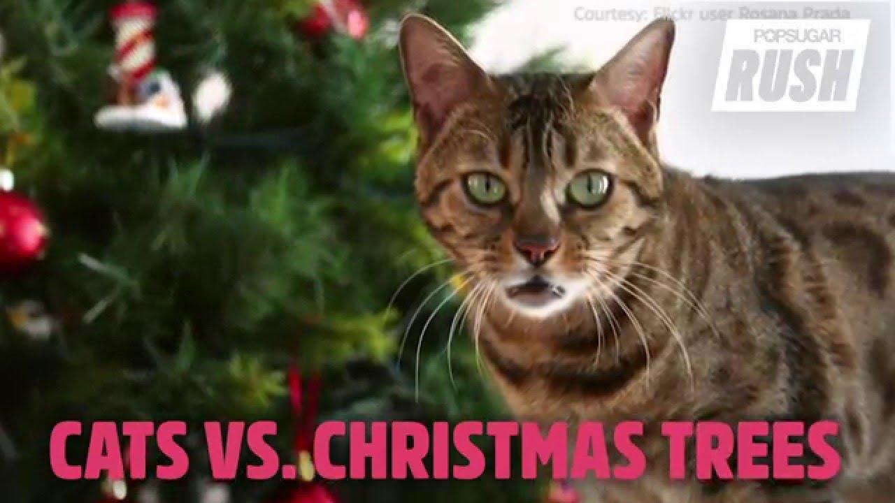 Cute Cats vs. Christmas Trees - YouTube