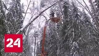 Ледяной дождь оставил без света тысячи жителей Подмосковья