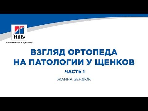 Вебинар на тему: «Взгляд ортопеда на патологии у щенков. Часть 1». Лектор – Жанна Бендюк